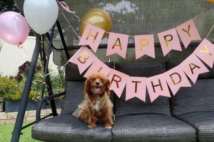 dog birthday party