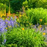 Shade Loving Perennials